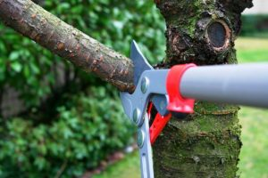Tree pruning services Boronia